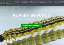buxus rups